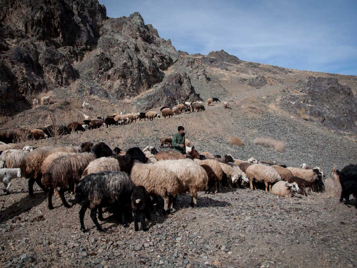Nomadic pastoralist with his sheep in the mountains of Chaharmahal and Bakhtiari Province, Iran